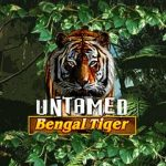 Kolikkopelit Untamed Bengal Tiger Microgaming Thumbnail - Toripelit.com