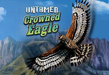Kolikkopelit Untamed Crowned Eagle Microgaming Thumbnail - Toripelit.com