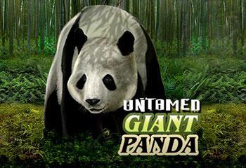 Kolikkopelit Untamed Giant Panda Microgaming Thumbnail - Toripelit.com