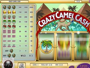 Kolikkopelit Crazy Camel Cash, Rival SS - Toripelit.com